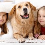 So finden Sie Flöhe beim Hund - Hundeflöhe bekämpfen