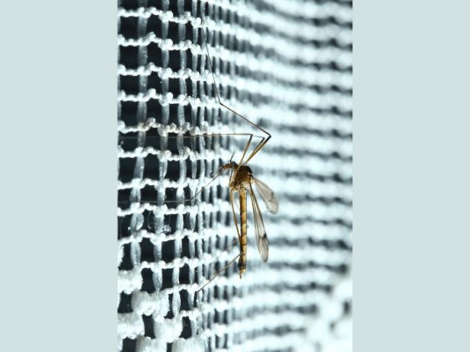 Stechmücken vertreiben - Biteling