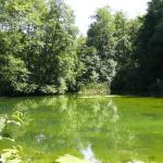 Stehende Gewässer als natürliche Brutstätte für Stechmücken - Biteling
