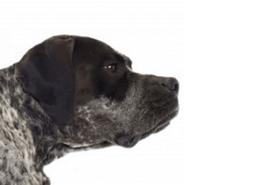 Alles über Hundeflöhe - Biteling