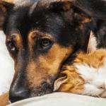 Hunde- und Katzenflöhe sind bei der Wahl ihres Wirts nicht wählerisch - Biteling