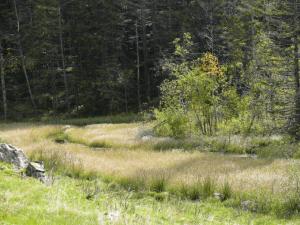 Lichte Feuchtbiotope sind eine bevorzugte Landschaft für Bremsen