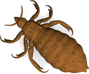 Kopfläuse sind die am weitesten verbreitete Läuseart und sterben ohne den Menschen - Alles über Kopfläuse